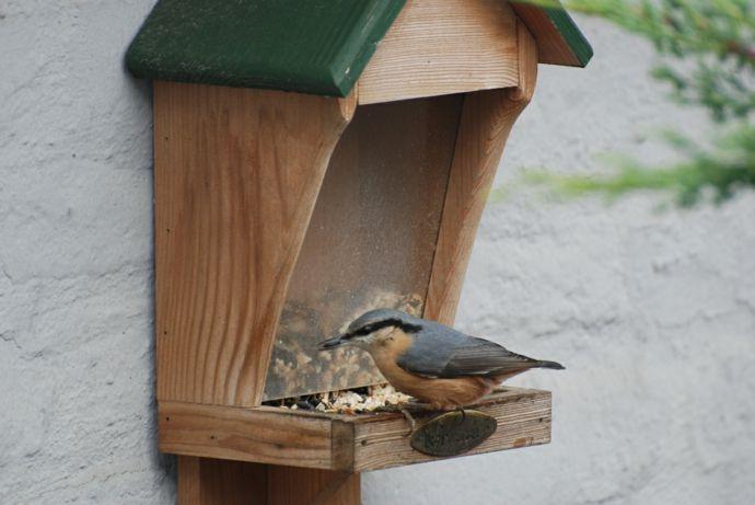 Der Kleiber-Vogelhäuschen