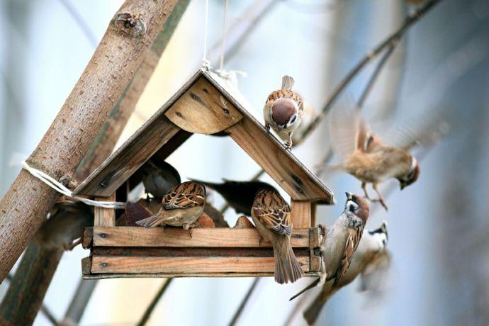 Nahrung Schutz Vogelfutter-Vogelhäuschen