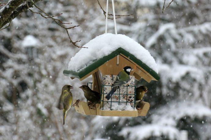Schutz und Futter im Winter-Vogelhäuschen