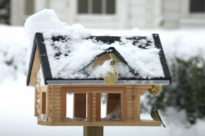 Vogelfutterung im Garten-Vogelhäuschen