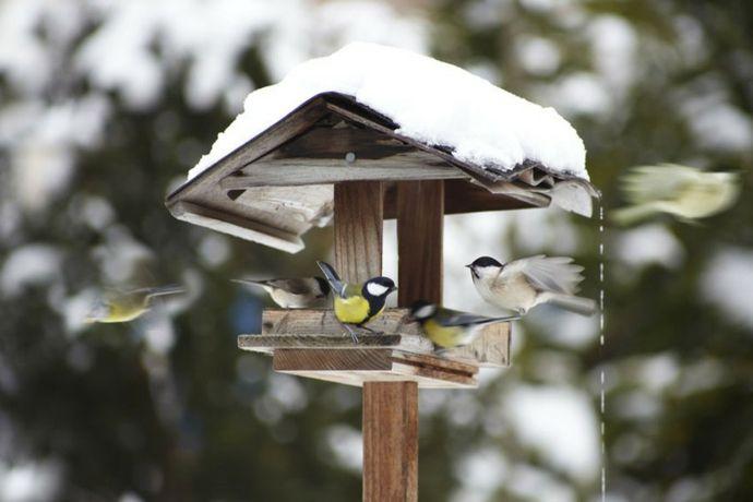 Vogelfutterung im Winter-Vogelhäuschen