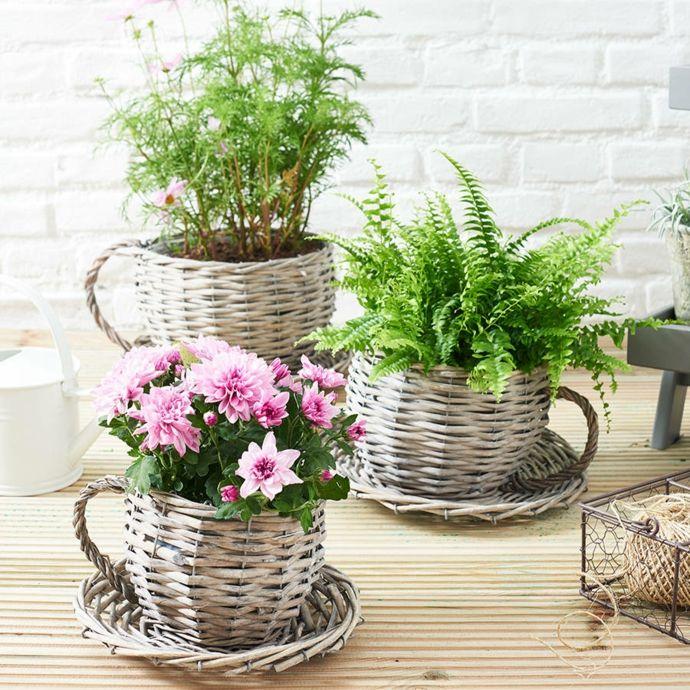 Weidenkörbchen Teetasse Blumen-Pflanzkübel