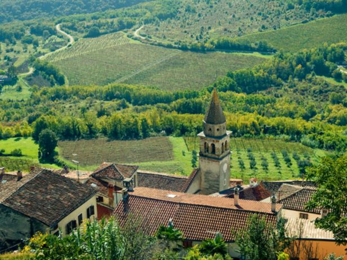 Bildschönes Kroatien zählt zu den ältesten Weinherstellern-Weinreben Weingut Weinanbaugebiet Weinherstellung