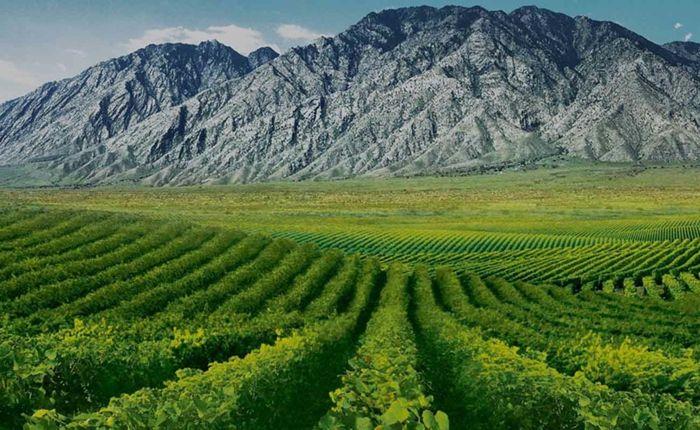Bis zum Jahr 2020 sollen sich die Weinbauflächen im Nordwesten Chinas ansehnlich vergrößern-Weinreben Weingut Weinanbaugebiet Weinherstellung
