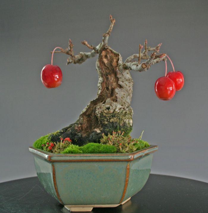 Bonsai mit Früchten-Bonsai Idee Green