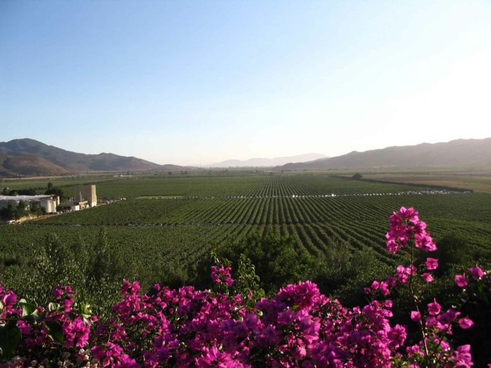 Das Guadalupe Valley ist ein populäres Reiseziel in Mexiko-Weinreisen Weingut Weinanbaugebiet Weinherstellung weltweit Mexiko