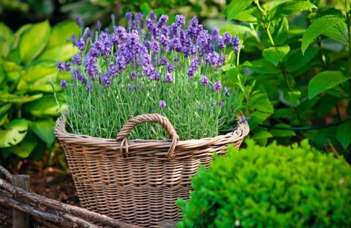 Gartengestaltung im Innenhof - Trendomat.com
