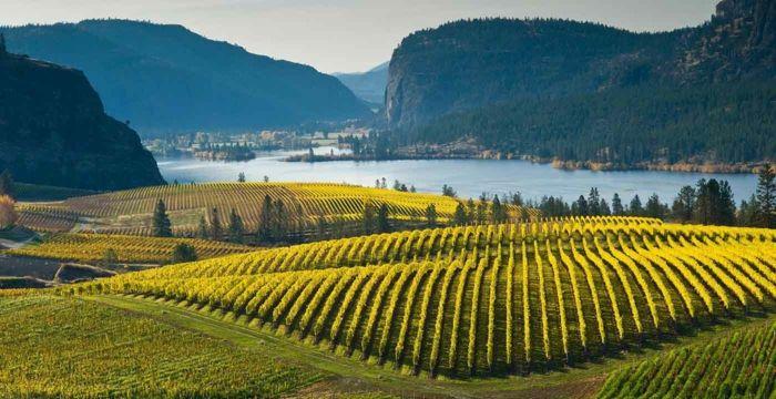 Neben dem Touristmus profitiert auch die Weinherstellung auf der Niagara-Halbinsel-Weinreben Weingut Weinanbaugebiet Weinherstellung weltweit