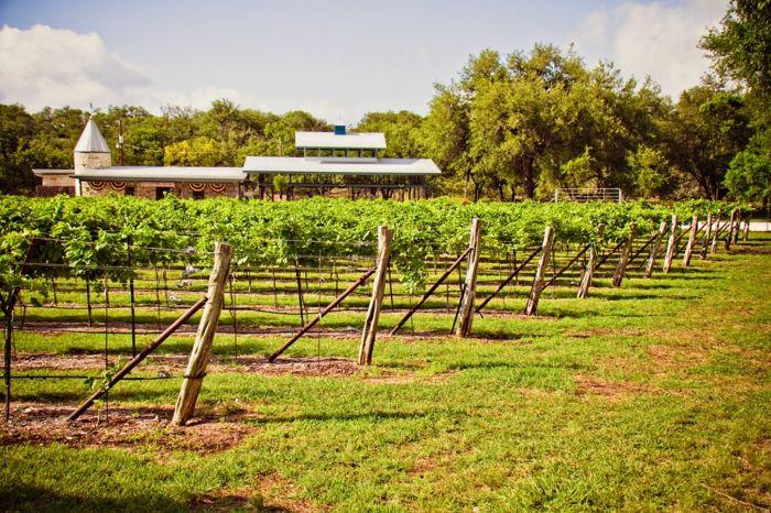 Trockenes Klima und Rotweinherstellung im heißen Texas-Weinreben Weinreisen Weinanbaugebiet Weinherstellung