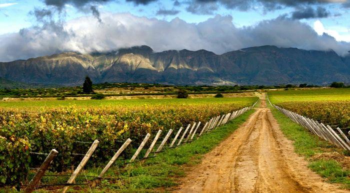 Weinanbau in den schönsten Teilen Boliviens-Weinreben Weingut Weinanbaugebiet Weinherstellung