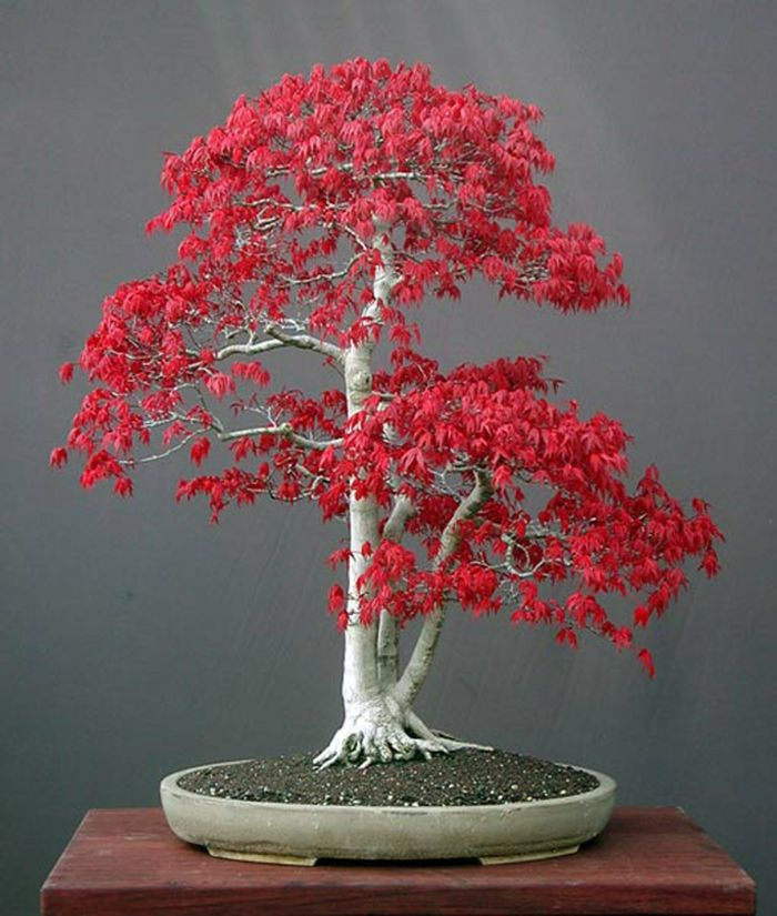 bonsai-Bonsai Idee Green