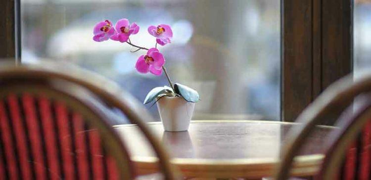 Ausrichtung wohl-Orchideen Pflege