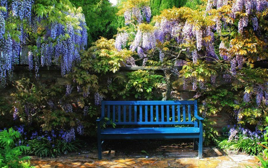 Blauregen im Duftgarten-Deko Blüten