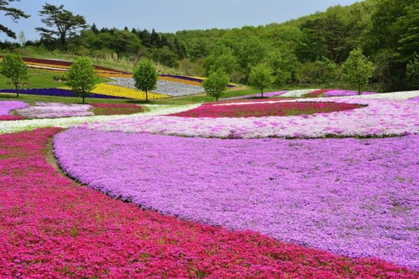 Duftgarten voller Farben