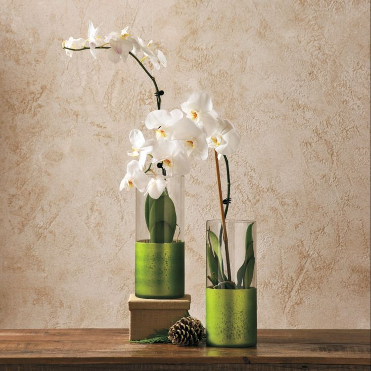 Hauspflanze exotisch Orchidee Bestseller
