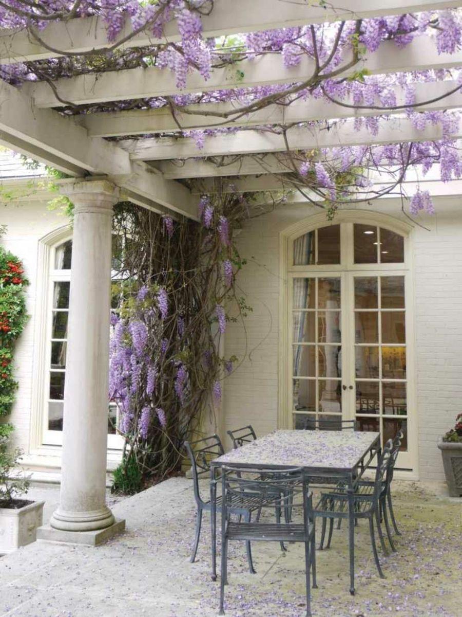 Pergola mit Blauregen bepflanzen-Deko Blüten