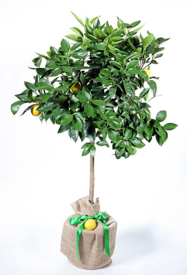 Pflanzen Kinderzimmer Natur erleben