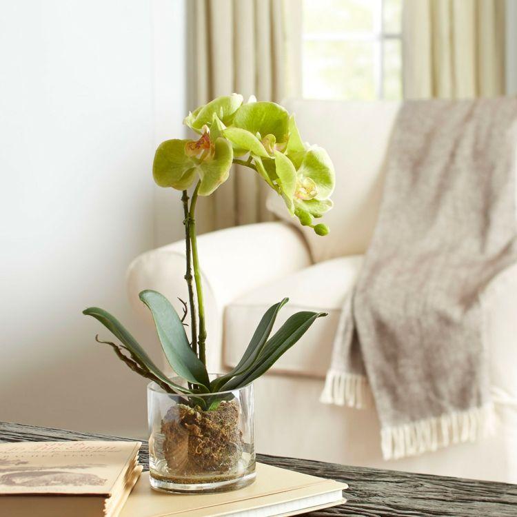 ber die orchideen. Black Bedroom Furniture Sets. Home Design Ideas