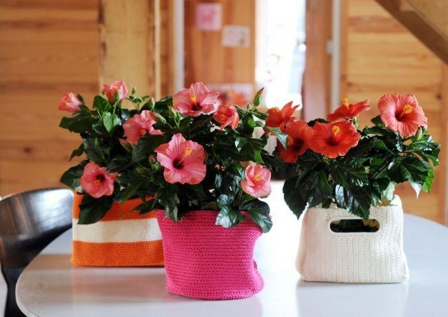 Rot Blüten Hauspflanzen