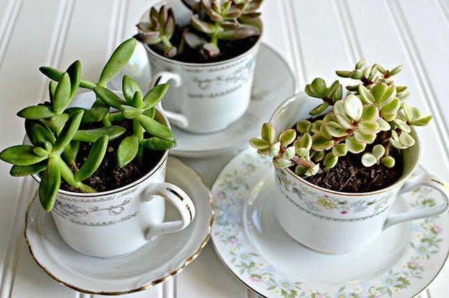 Tasse Pflanzen Topf Sukkulenten Arrangement