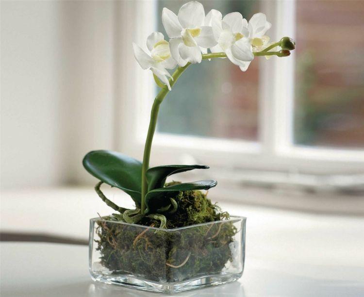 Zimmerpflanzen Fensterbank Mini-Orchidee