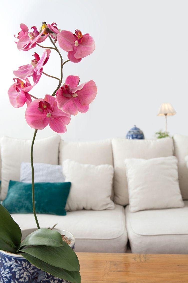 Zimmerpflanzen Geschenk Wohnideen Wohnzimmer