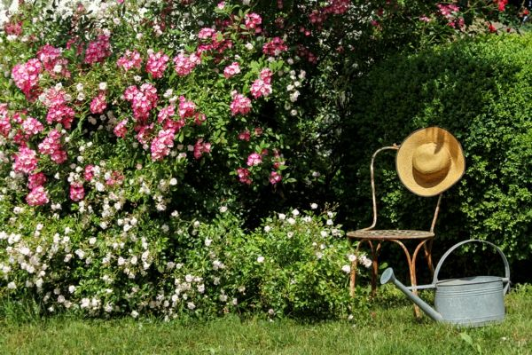der duftende Rosengarten