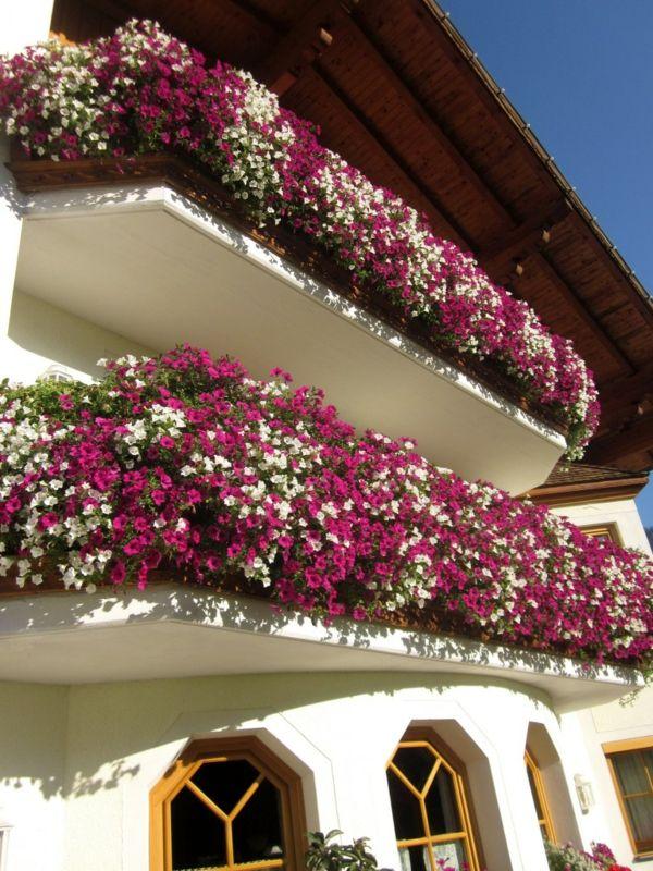 duftende Blumenpracht Petunien