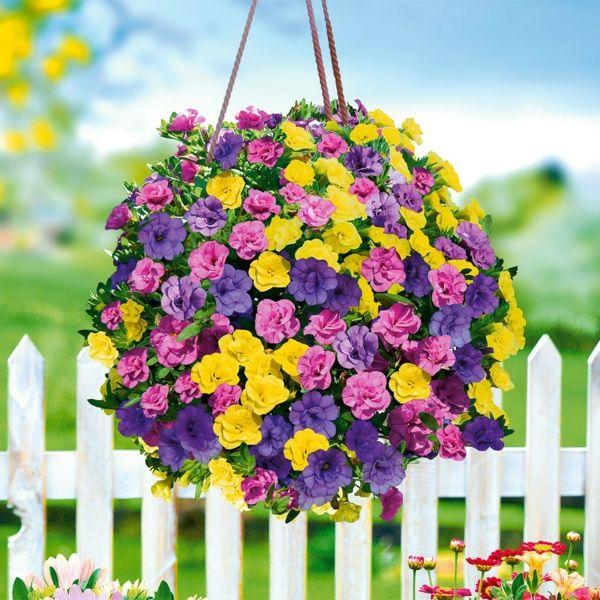wohlriechende Petunien als Hängepflanze für die Terrasse