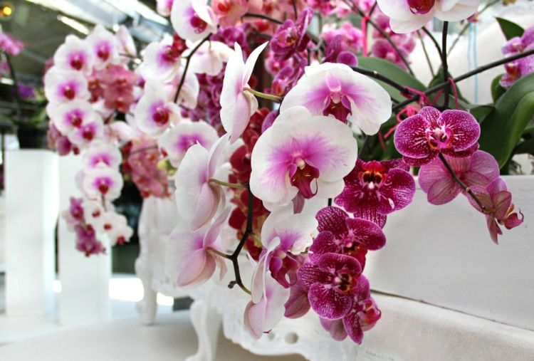 wunderschöne Orchideen pflegen