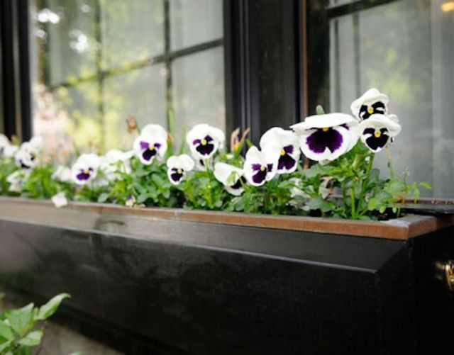 Balkonkasten Pflanzenwachstum Tageslicht Stiefmütterchen