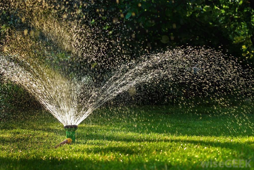 Bewässerung Garten Rasenfläche Pflanzenart
