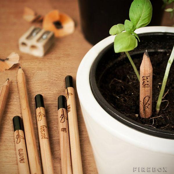 Bio Bleistift Samelkapsel Kräuterpflanzen