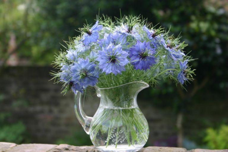 Jungfer im Grünen sehen in der Vase wunderschön aus