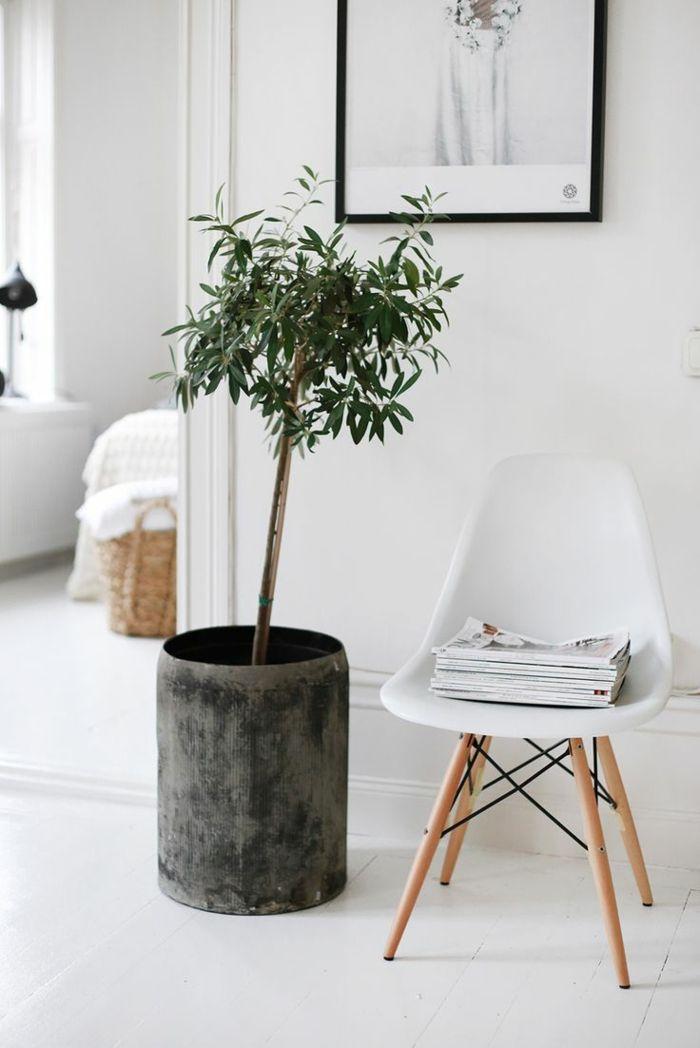 Kübelpflanzen dürfen Ende März wieder ins Freie