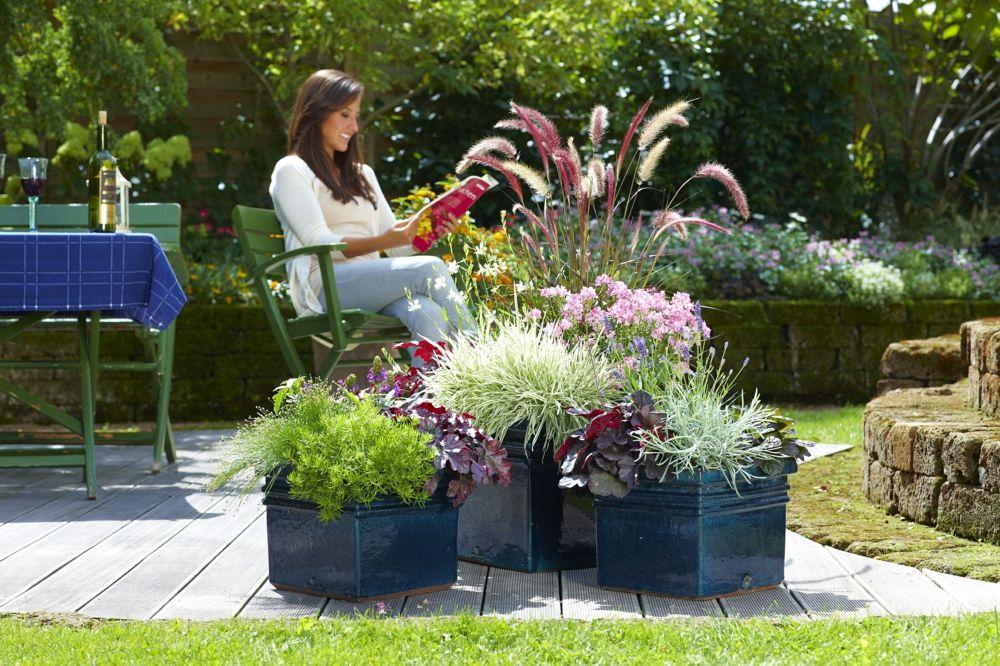 Blüten, Blätter und Gräsern bieten reizvolles Herbstambiente in Kübeln und Trögen