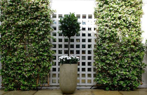 Spalier im Garten anstatt dicken Mauern sind viel schöner und lebendiger