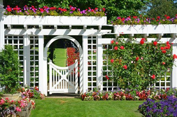 Spalier mit schönem Design für Kletterpflanzen und Blumen