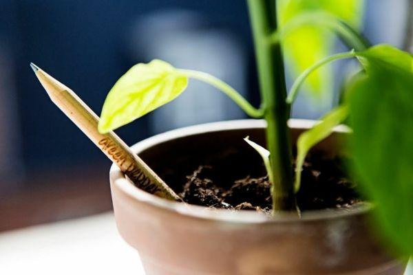 Sprout Bio Bleistift Einpflanzen Innovation