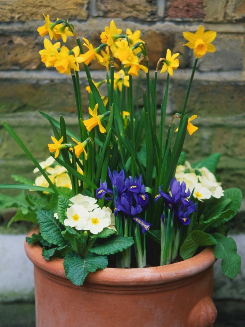 Tonttopf mit Frühlingsblumen für den Außenbereich