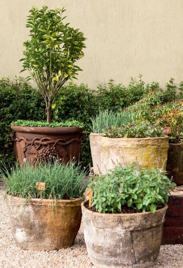 Topfgarten in Keramiktöpfen ganz wie am Mittelmeer