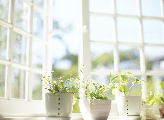 Кleinblättrig Topfpflanzen Pflege Sonnenlicht