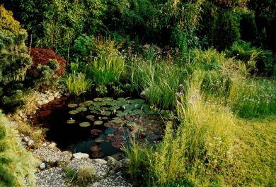 Kreative Tipps, wie man einen kleinen Teich im Garten genießt ...