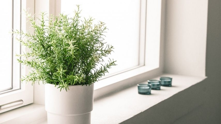 wie viel licht brauchen unsere zimmerpflanzen. Black Bedroom Furniture Sets. Home Design Ideas