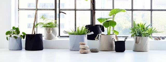 Wie viel licht brauchen unsere zimmerpflanzen - Kleine zimmerpflanzen ...
