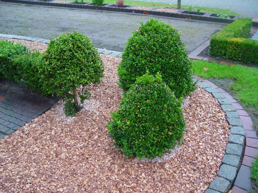 Zierkies Ziersplitt Buchsbaum Sträucher
