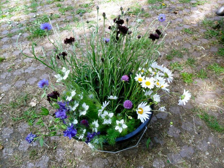 der Sommergarten im Topf mit einer frischen Kombination aus Weiß und Blau