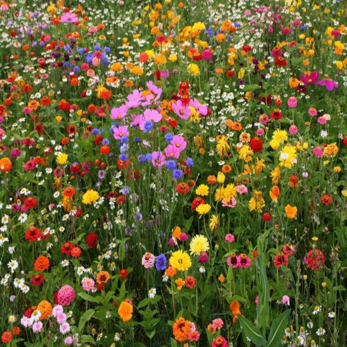 einjährige Sommerblumen in vorsortierten Farbmischungen