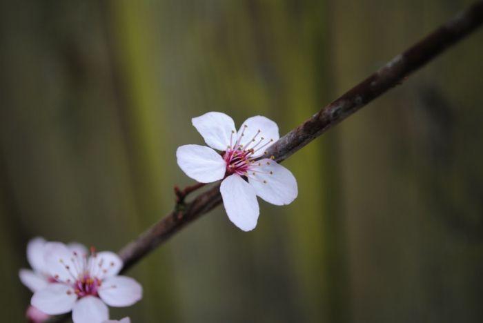 im März werden Gehölze in den Garten eingepflanzt