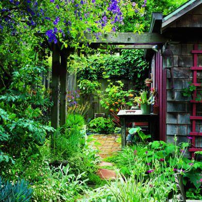 Gartenhütte Hausseite Pergola Pflanzen einlegen